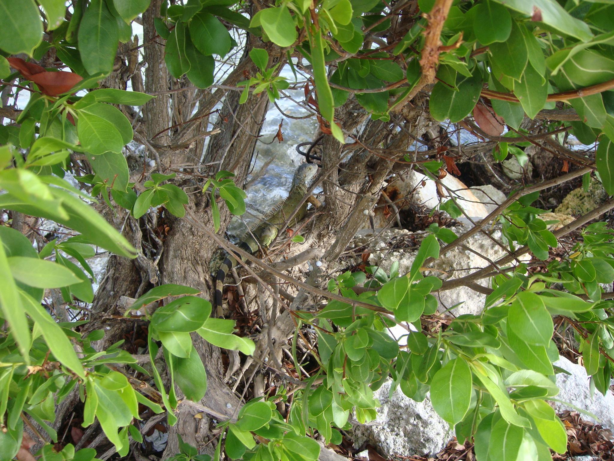 Keys photo thread-ssr-miami-key-west-2012-058.jpg