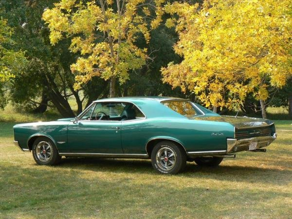 Showcase cover image for 1966 GTO